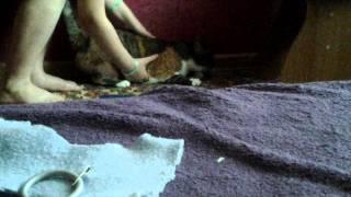 Как сделать шлейку для кошек