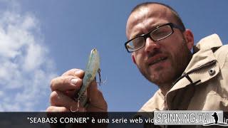 Artificiali Da Pesca Wtd (walking The Dog) - Seabass Corner - Spinning Tv