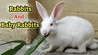Rabits cage setup & baby rabits.. mother rabit with her little baby..