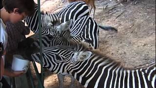 Morgan & Amy go to the Briarwood Safari near Morristown.