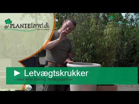 Havekrukker. køb flotte billige udendørs krukker til haven