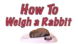 How To Weigh A Rabbit