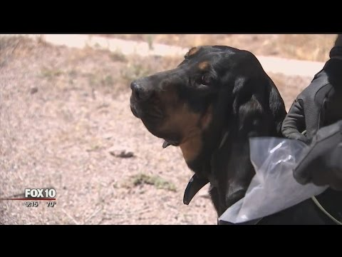 Tracking Fugitives With The MCSO Bloodhounds