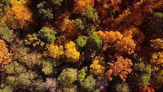 Film om hösten