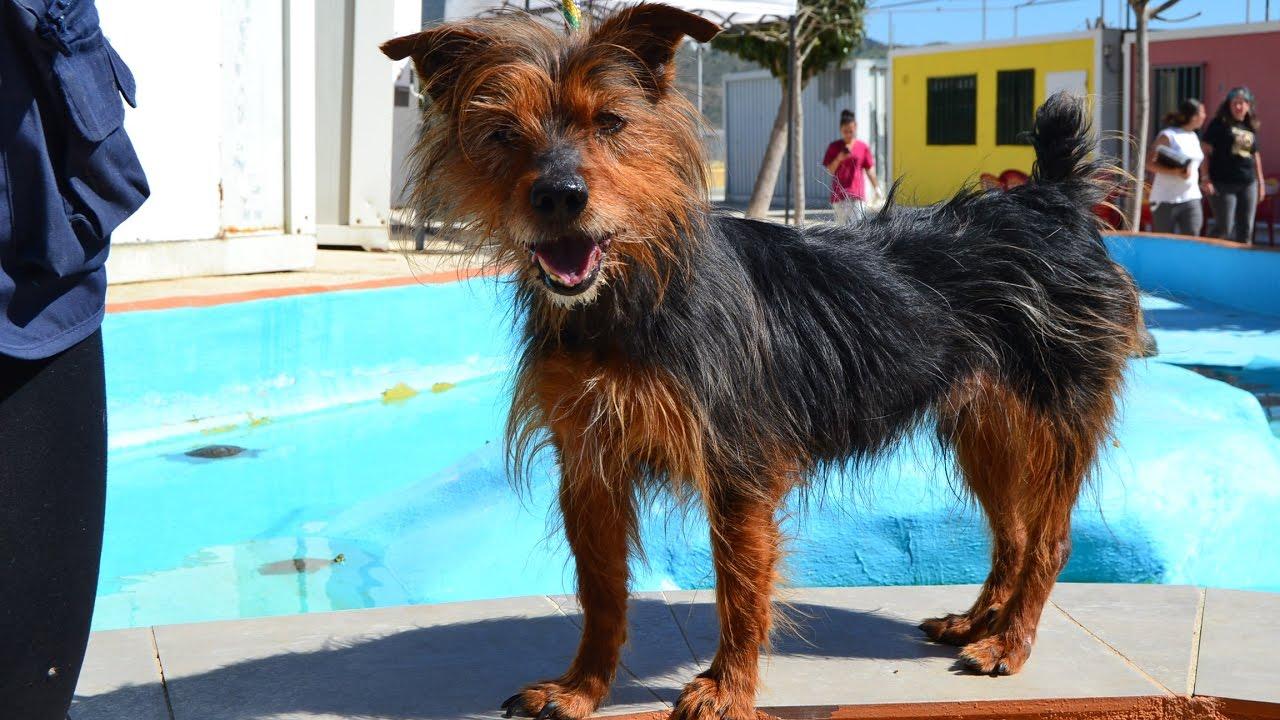 Yanko protectora de animales y plantas de m laga con for Protectora de animales malaga ciudad jardin