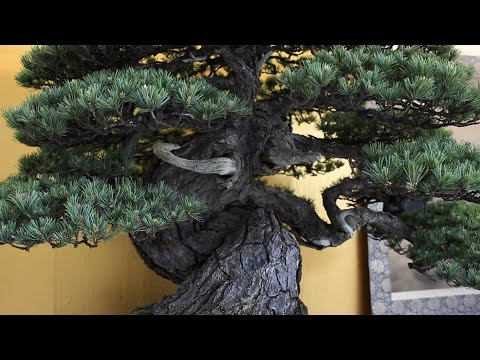 World Bonsai Convention