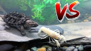 GODZILLA TURTLE EATS RARE WHITE LOBSTER CRAWFISH!  *EPIC BATTLE ROYALE*