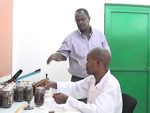 Recherche sur la culture des champignons comestibles à l'Université du Burundi