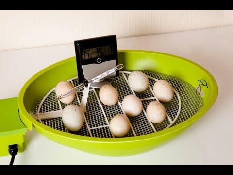 5 Best Egg Incubators 2018 | Best Egg Incubator Reviews | Top 5 Egg Incubators