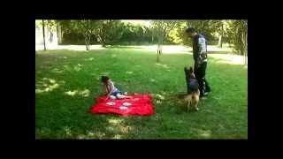 Profesyonel Köpek Eğitimi -- Bursa K-9 dan Profesyonel Çözümler 1 --