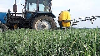 Полупар. 2-е опрыскивание пшеницы. Выращивание пшеницы 17.05.2018г. #СельхозТехника ТВ