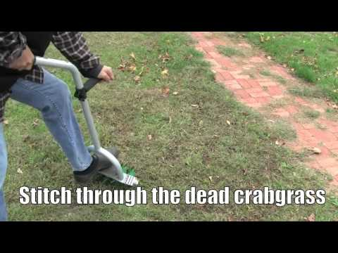 How to - Plant grass seed to stop crabgrass