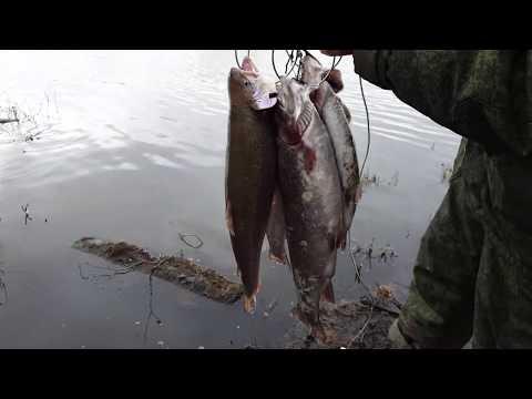 Встреча в лесу  Подписчики на водоёме  Рыбалка в России