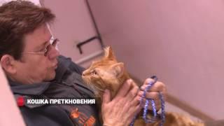 Владивосток: ветеринара избили мёртвой кошкой
