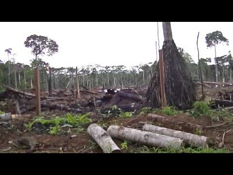 Destruction to the Amazon rainforest