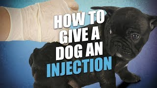 How to Give a Dog an Injection At Home (The Easy Way)