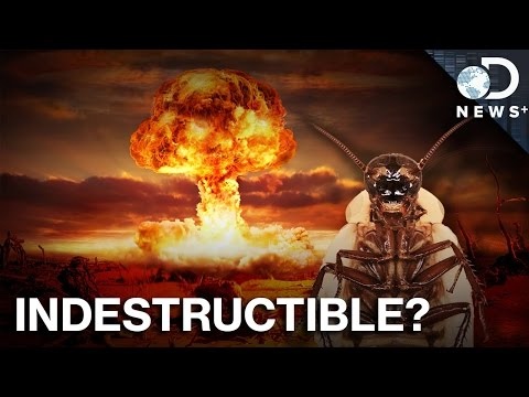 Neither Decapitation Nor Nukes Will Kill A Cockroach… At First.