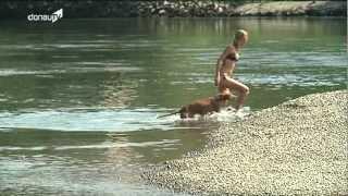 Donau-Niedrigwasser -- des einen Freud, des anderen Leid
