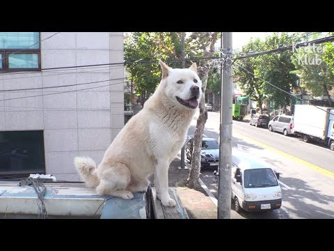Dog Standing On The Roof 24/7 Wants To Keep This Legit View Alone | Kritter Klub