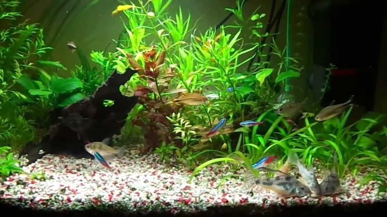 54l nature aquarium feeding youtube for Spacearium aquariums
