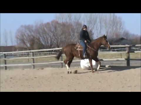 Date N Dash, 2013 AQHA Sorrel Mare. For Sale!