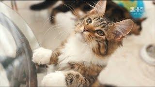 Яким має бути харчування щасливих котів
