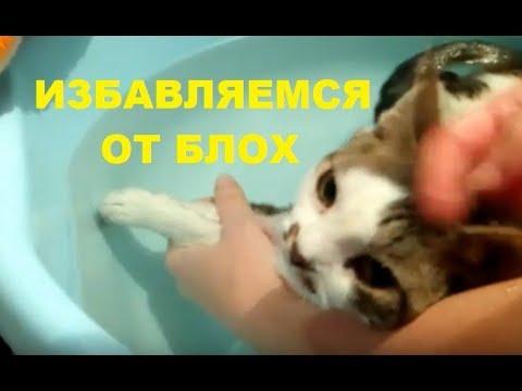 Как вывести блох у котят в домашних условиях