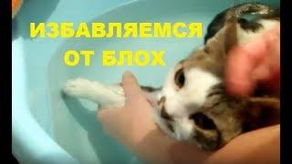 видео Как избавиться от блох у кошки в домашних условиях, народные средства