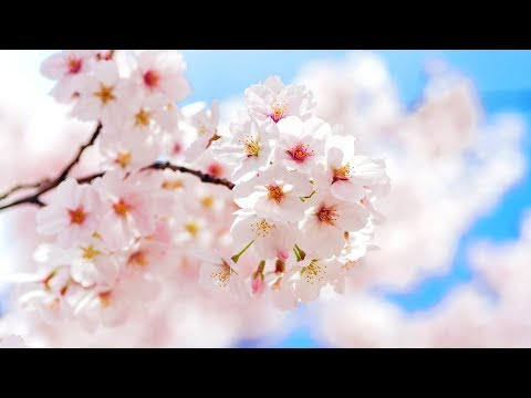 Morning Relaxing Music - Meditation Music For Stress Relief, Yoga Music, Study Music (Wyke)