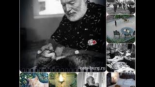 ХЕМИНГУЭЙ - БЕЗУМНЫЙ ЛЮБИТЕЛЬ шестипалых КОШЕК  ! / Hemingway and his six-fingered cats