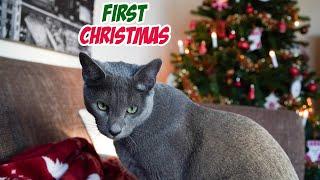 KITTEN'S  CHRISTMAS | Decorating The House | SILENT VLOG