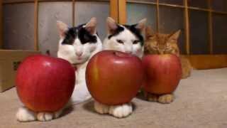 のせ猫 まとめ1 thumbnail