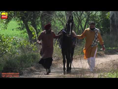 # 1 ਬੈਲ ਗੱਡੀਆਂ ਦੀਆਂ ਦੌੜਾਂ 🔴 बैलों की दौड़ें بیلوں کی دودن 🔴 OX RACES at NAGRA (Ludhiana) 🔴 Shift 1