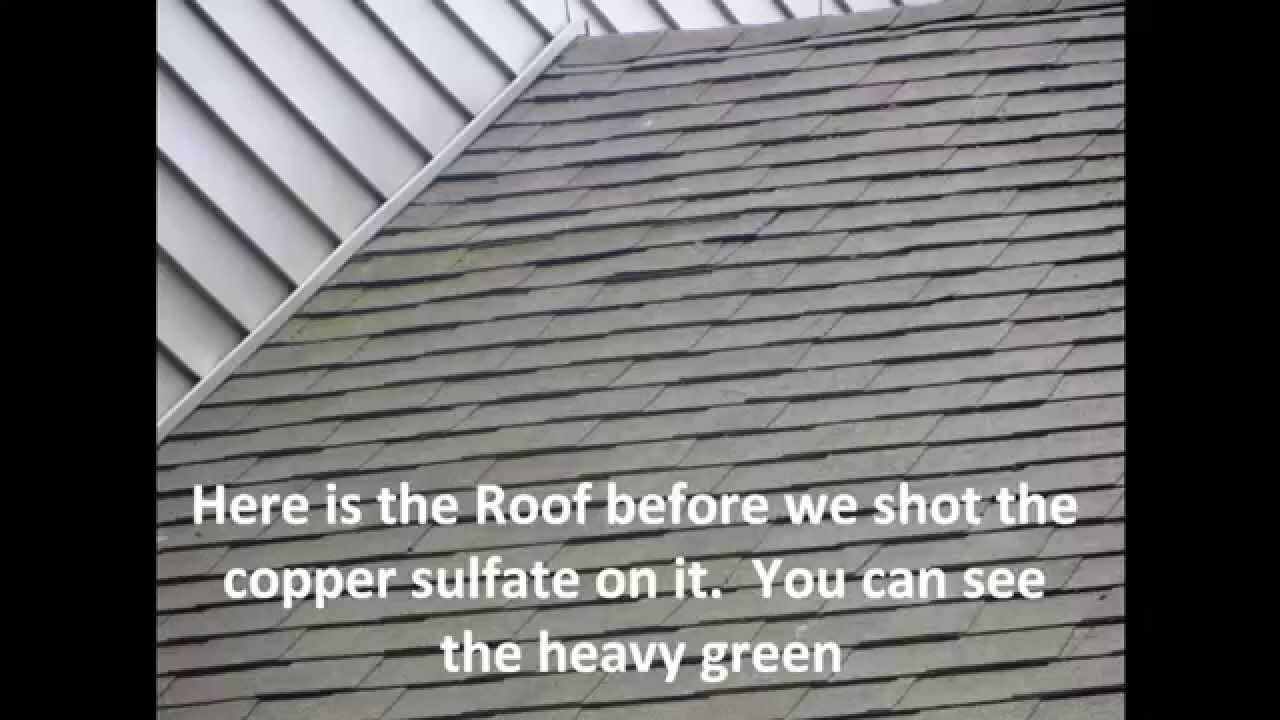 One Day After Shooting The Roof With 4 Copper Sulfate