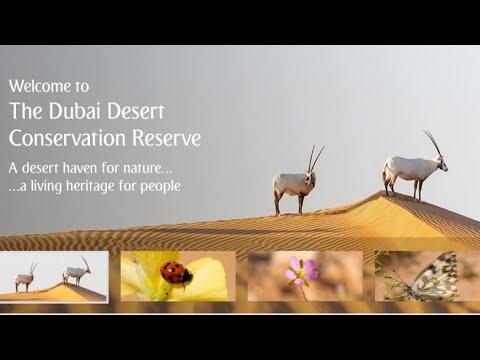 Dubai Desert Conservation Reserve. #dubai #burjkhalifa
