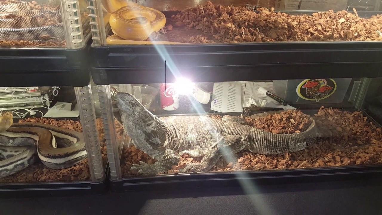 Reptiles San Diego