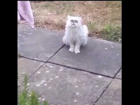 What the fock is that? Is that fucking cat?