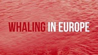 Sea Shepherd prepares legal proceedings against Denmark