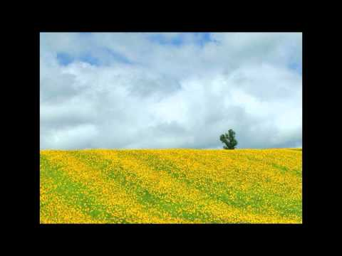 Ellwood - Sunshine Garden