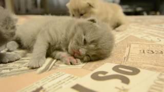 Дневник котят #2 | День 10 - Котята выросли!