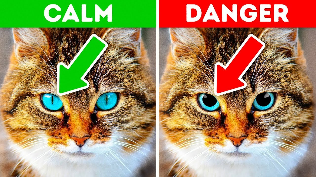 World day of cats: we learn funny riddles about cats