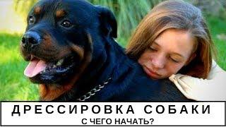 Дрессировка собаки, с чего начать?
