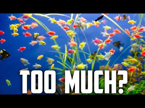 How Many Fish Can I Put In My Aquarium?