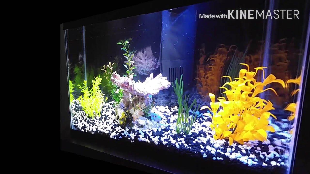 Fish for first tank - 10 Gallon Glofish Tank Kids First Tank Creating Fish Addicts