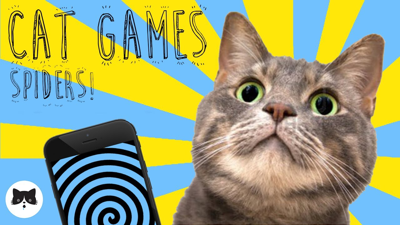 CAT GAMES - Entertaining Videos for Cats - SPIDERS!
