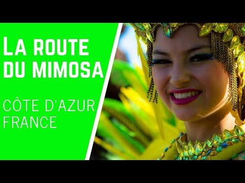 La Route du Mimosa sur la Côte d'Azur
