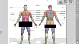 Regions of the Body Anatomy