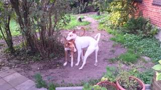 Hunde aus Mallorca Gracia amp; Bibo