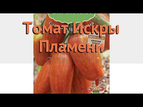 Томат обыкновенный Искры Пламени (iskry plameni) 🌿 обзор: как сажать, семена томата Искры Пламени