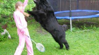 Прыжки на людей. Воспитание без насилия. Метод Пола Оуэнса.(Прыжки на людей. Собака - друг человека. Воспитание без насилия. Метод Пола Оуэнса. Вопрос не в том, КАК запре..., 2015-08-05T11:12:46.000Z)